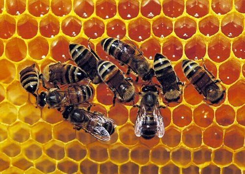 L'Express : Parrainez une ruche de Lozère!