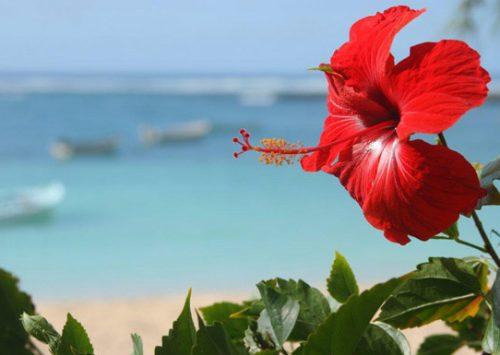 Le Quotidien du Tourisme : La Martinique fait la fête à Saint-Germain-des-Prés
