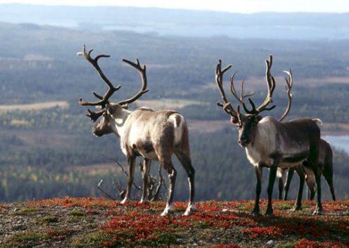 100% Finlande : Helsinki à Saint-Sulpice